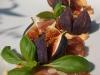 Catering / Cooking: vijgen met buffelmozzarella en basilicum